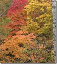 伊藤さんの里山の紅葉