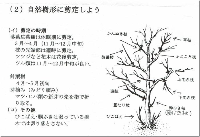 樹木の剪定bb