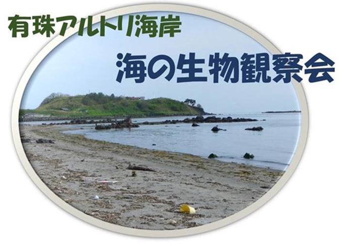 有珠アルトリ岬海岸海の生物観察会
